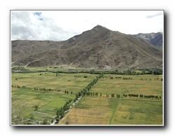 Tibet plantations