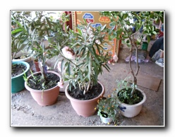 bimëve