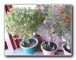 kuil tumbuh-tumbuhan