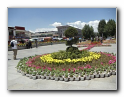 Lhasa flowers